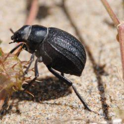 50 Insectes imprescindibles del delta