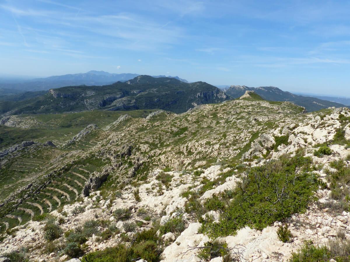 Habitat del còlit negre a la Serra de Cavalls (Pinell de Brai). Foto Pere Josa