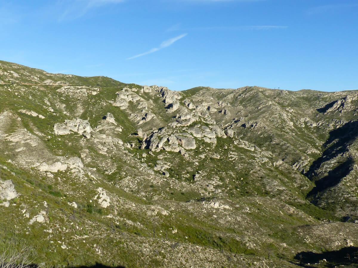 Serra del Boix (El Perelló) un dels sectors amb major densitat de còlit negre a les Terres de l'Ebre. Foto Pere Josa