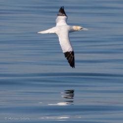 Curs d'identificació d'ocells marins