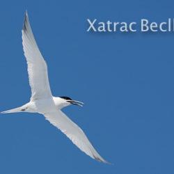 Els Ocells Marins del Delta de l'Ebre