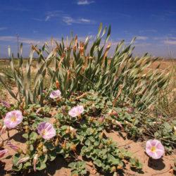 Sortida botànica al Delta de l'Ebre