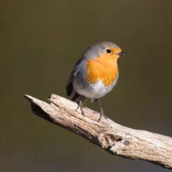 Curs bàsic d'ornitologia